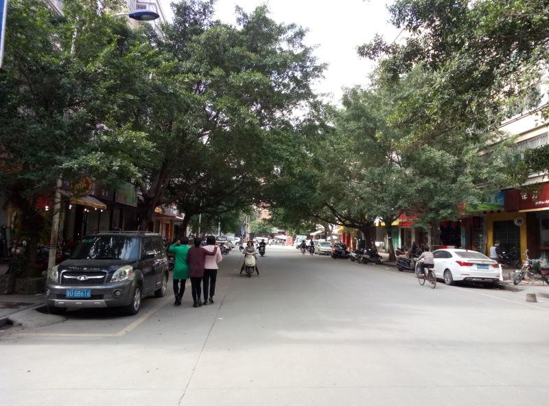 枫溪小结德路变美了_潮州新闻网-潮州第一区长小学语文单元门户图片
